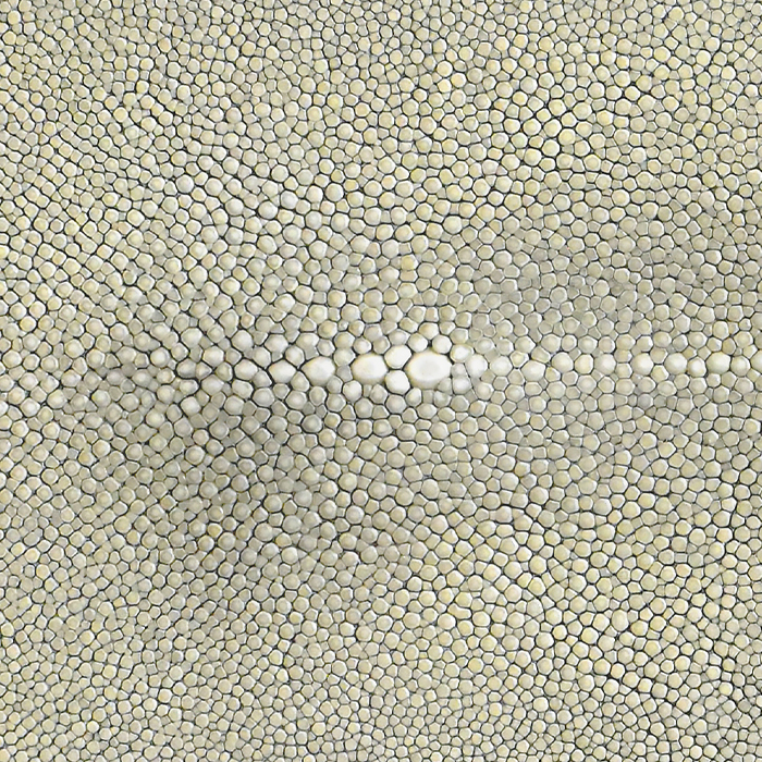 Real Shagreen Stingray